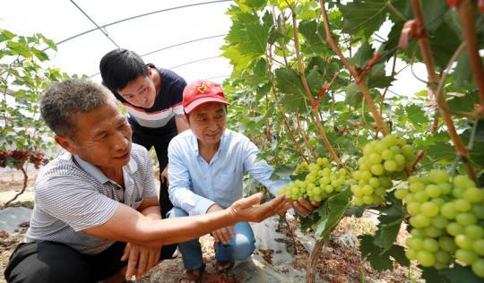科技入户助农增收