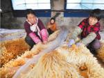生态农业助力乡村振兴