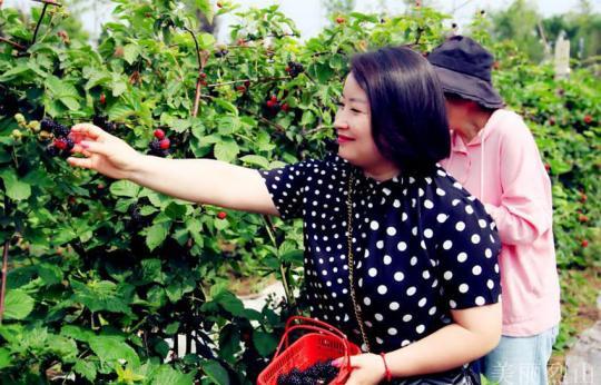 特色黑莓种植富农家