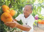 桃子成熟供应市场