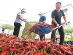 党建引领 助农增收