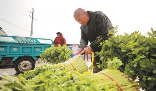 采收蔬菜保供应