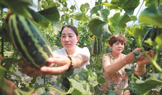 家庭农场助力乡村振兴